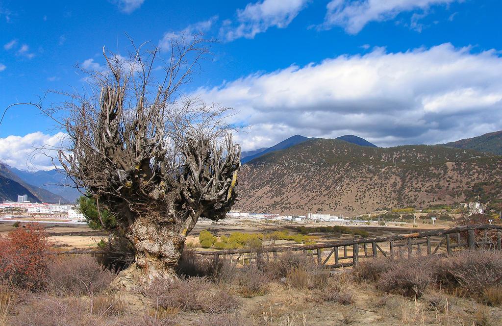 西藏旅游的经验和常见问题  第4张