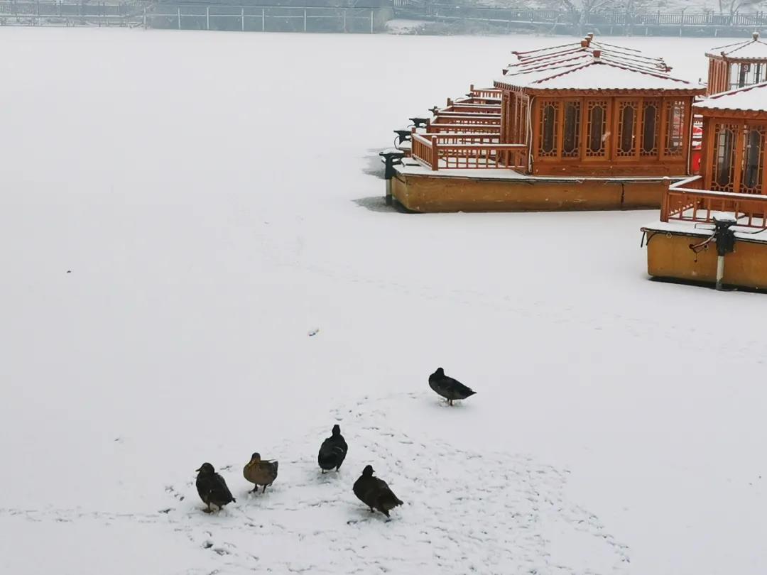 庆都山雪景图片  第14张