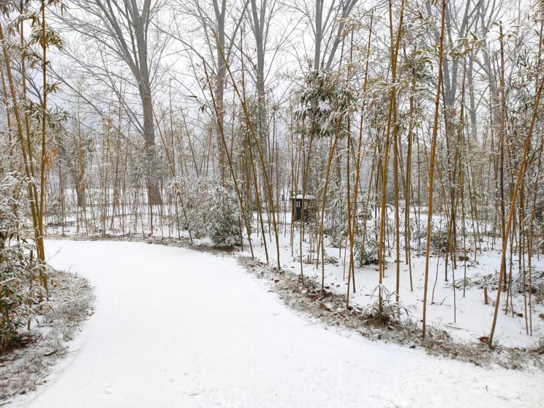 庆都山雪景图片  第20张