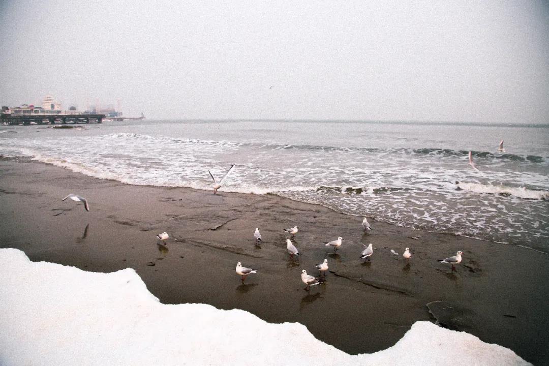 北戴河冬季最佳观赏地点  第10张