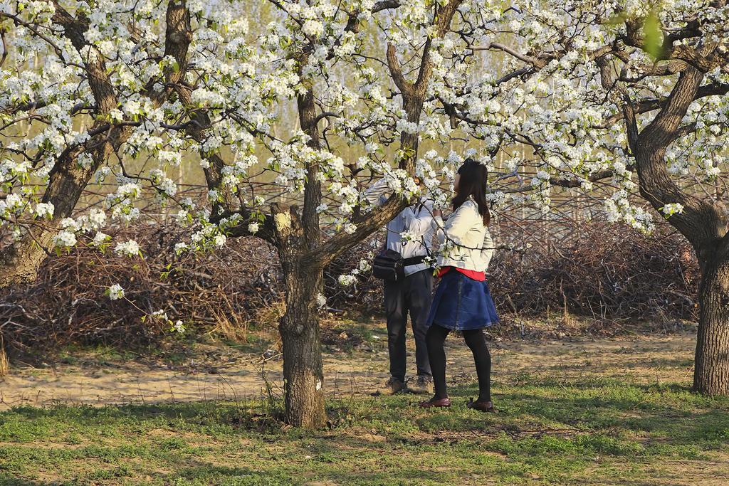 漫步春天,石家庄新推六大春游线路  第4张