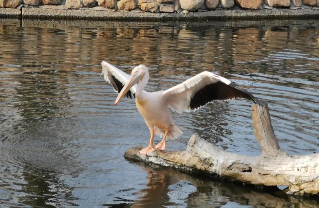 四月开始,秦皇岛野生动物园票价有变!