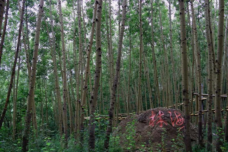 8月23日,野三坡百草畔景区开园营业啦!  第4张